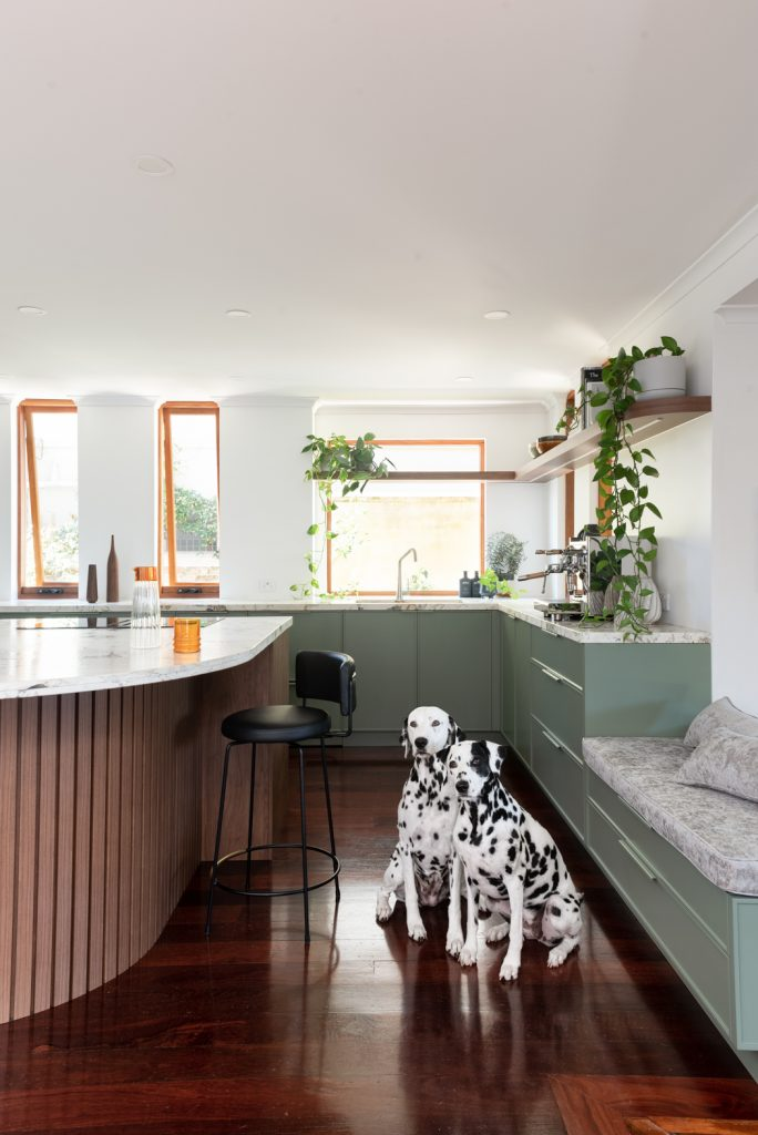 renovated kitchen in the suburb of Mount Lawley (Perth) with two Dalmatians sitting on the floor